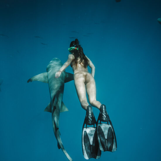 Nurse Shark Snorkeling